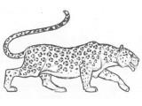 Логотип Ирбис, ООО